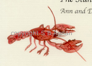 Painted Lobster