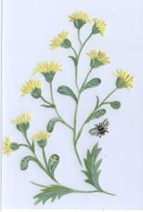 yellow floral aunan